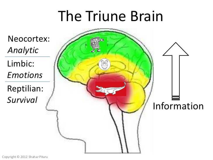 Cérebro Trino, Rapport e Vender Mais